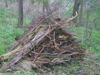 Log pile habitat for amphibians